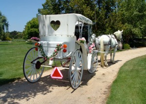 Rear view of white horse carriage at winery